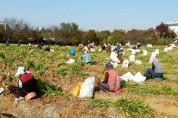 '농작업 지원단' 농촌인력 새로운 돌파구...2020년 확대운영