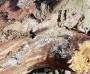 대산읍 소나무재선충병 신규 발생...황금산 인근 산림 의심 증상 발견